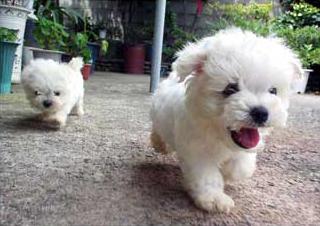 puppy_fluffiness.jpg